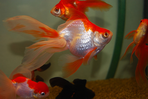 How to tell a female fish from a male fish-4108